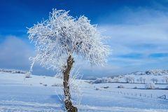 Märchenhafter-Wintertag