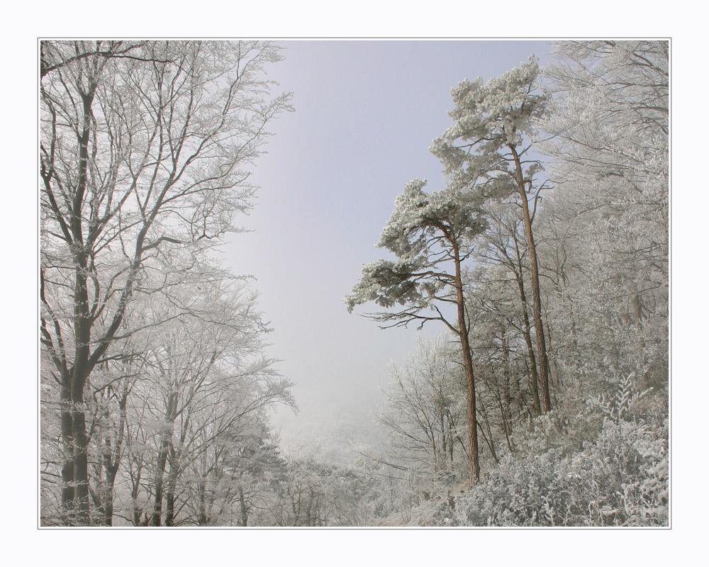 --märchenwald--