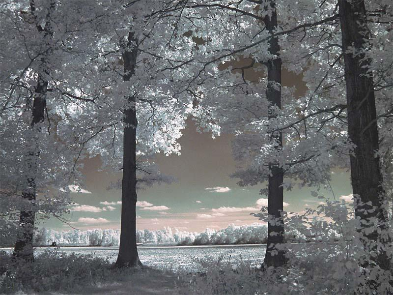 Märchenwald?