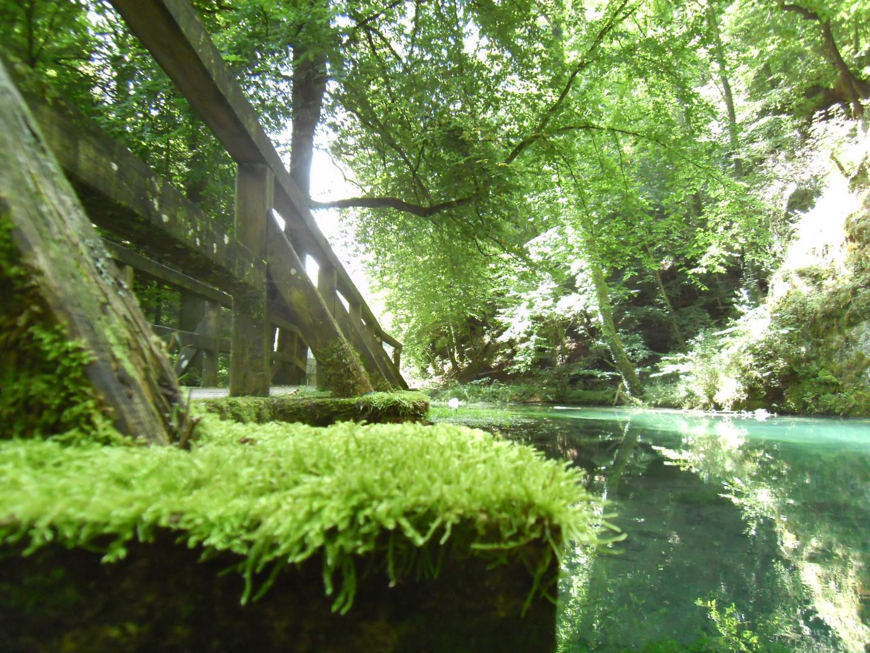 Märchenwaldmoos