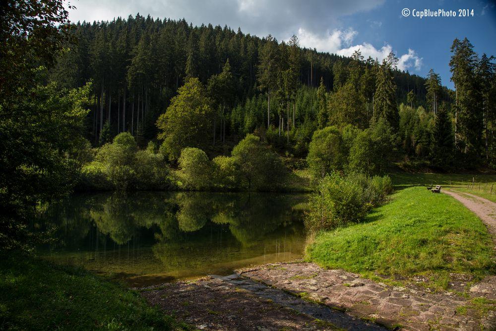 Märtesweiher in Klosterreichenbach (Nähe Baiersbronn)