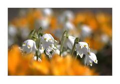 (März) Frühling