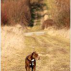 März--Spaziergang mit Kira