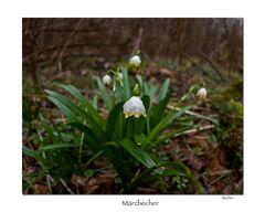 Märzbecher II