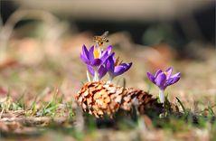 Märzfrühling