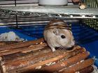 Mäuschen :-)