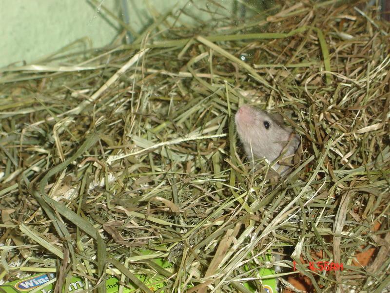 Mäuschen,mäuschen komm aus deinem Häuschen