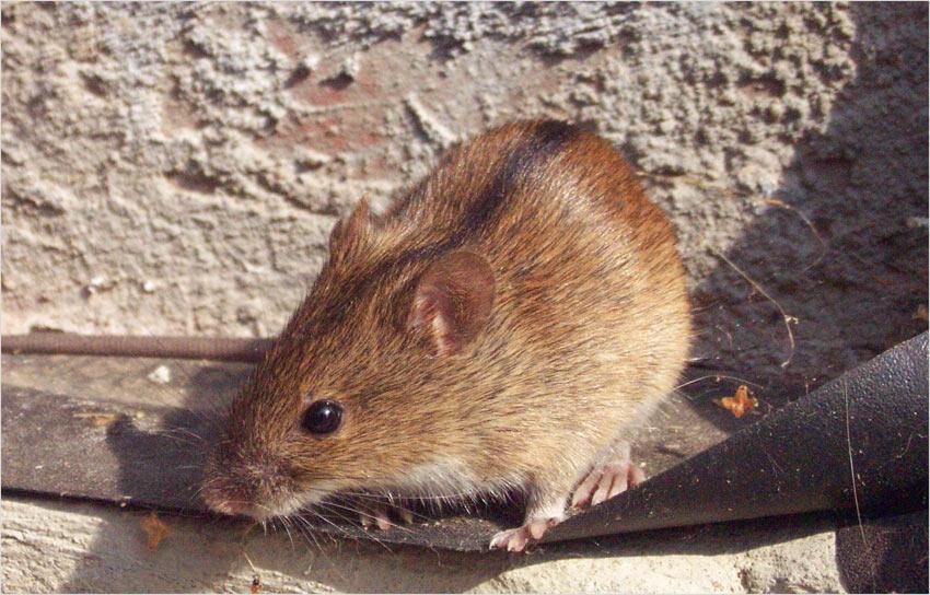 * Mäusebesuch * (reload)
