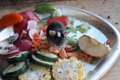 Mäusefrühstück im Tiergarten