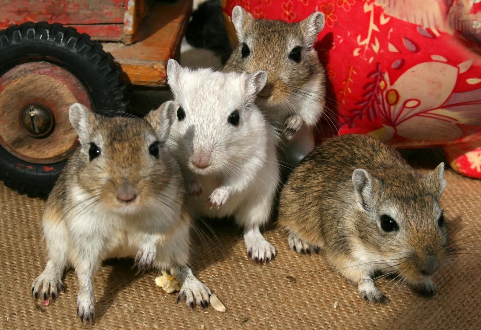 Mäuseleben