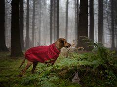 Mäxchen im Zauberwald