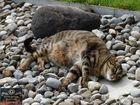 Mäxchen und seine Steine (2)