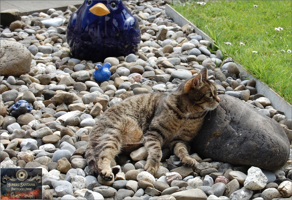 Mäxchen und seine Steine (3)