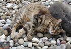 Mäxchen und seine Steine (4)