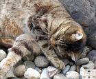 Mäxchen und seine Steine (5)