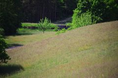 Magerwiese / Trockenrasen am Damm Rothsee