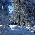 Magia de invierno / Magie hivernale / Winterzauber...02