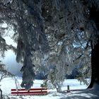 Magia de invierno / Magie hivernale / Winterzauber...03