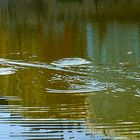 Magia dei Cerchi nell'Acqua