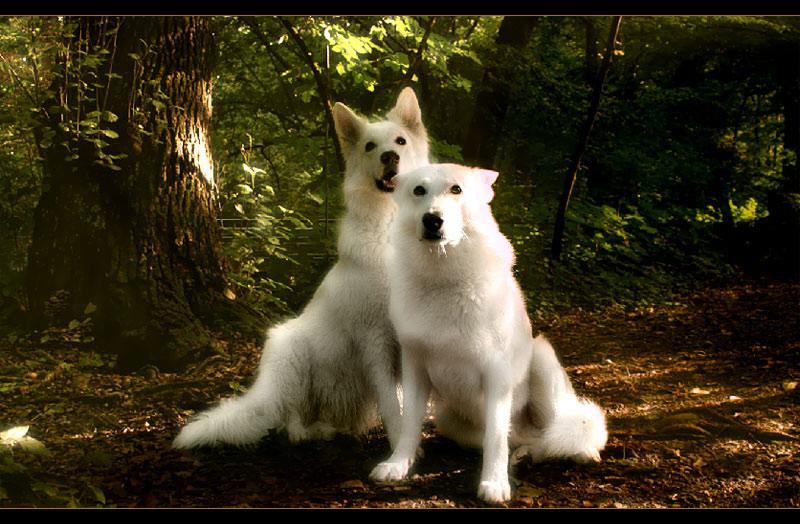 MAGIC DOGS