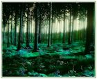 magic forest **