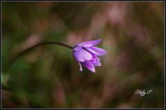 Magic life of flowers/Magica vita dei fiori