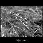 Magic nature...