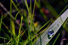 * Magic of Grassland *