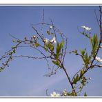 ~ magic of spring ~