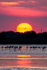 Magic sunset #13