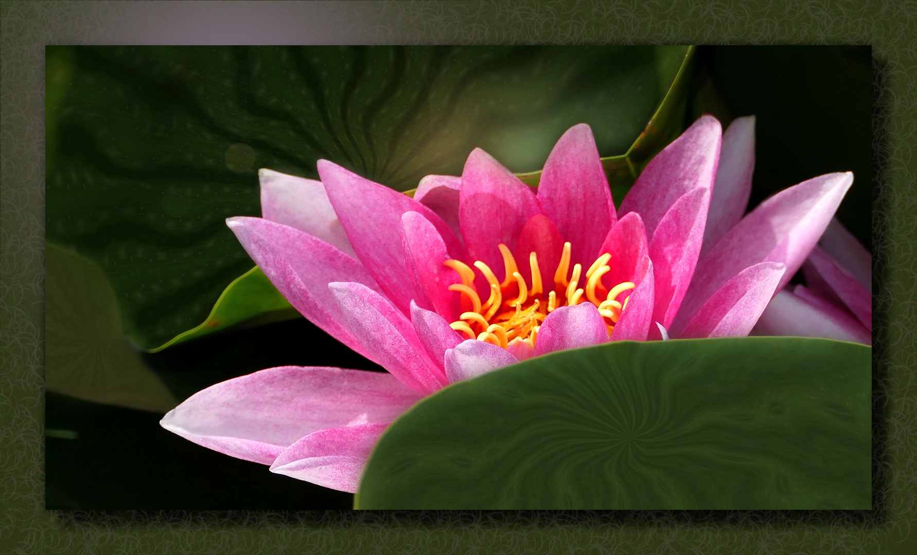 ... magic water lily