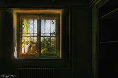 """"""" Magic Window """""""