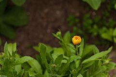 Magie der Blüten (3)
