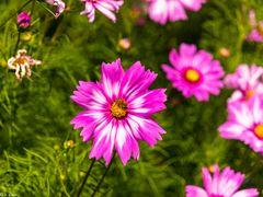 Magie der Blüten (4)