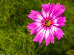 Magie der Blüten (5)
