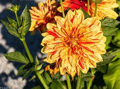 Magie der Blüten (6)