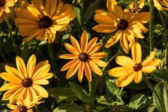 Magie der Blüten (7)