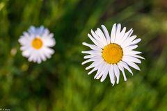 Magie der Blüten