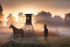 Magie des Morgenlichts