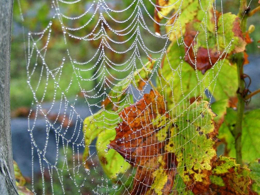 magie du brouillard dans la vigne