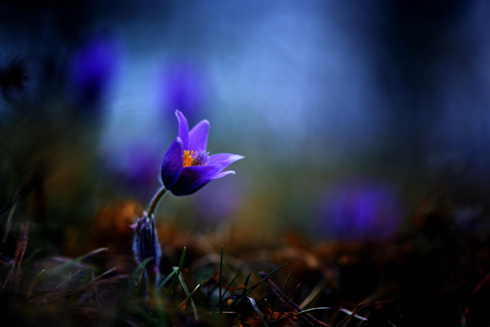 Magie du printemps