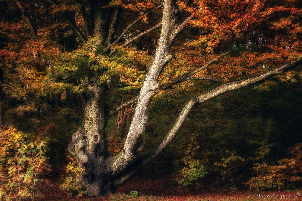 ... magischer Herbst ...