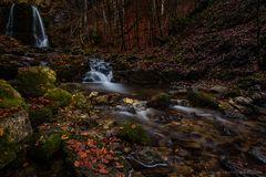 Magischer Herbstwald