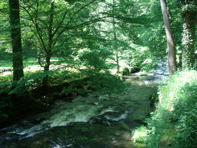 Magischer Ort im Schwarzwald