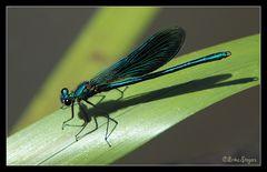magnífica azul