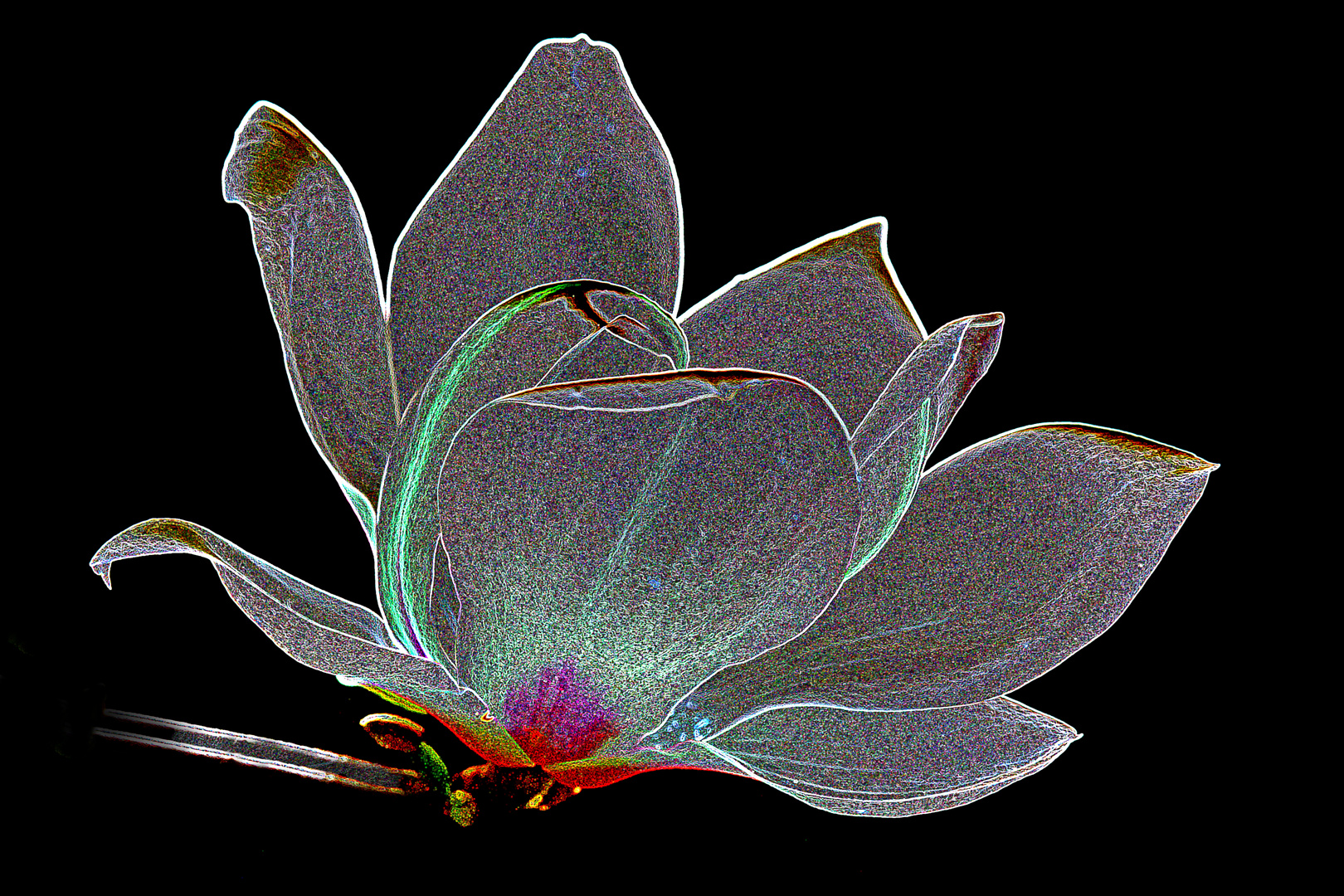 Magniolenblüte
