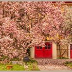 Magnolia Affoltern am Albis 2019-04-10 014 © HDR