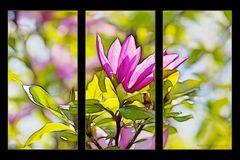 Magnolia Tryptichon