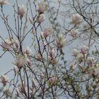 Magnolia's for When