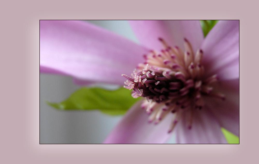 Magnolia's Heart